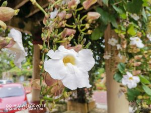 Huawei-Nova-5T-Review-Camera-5818