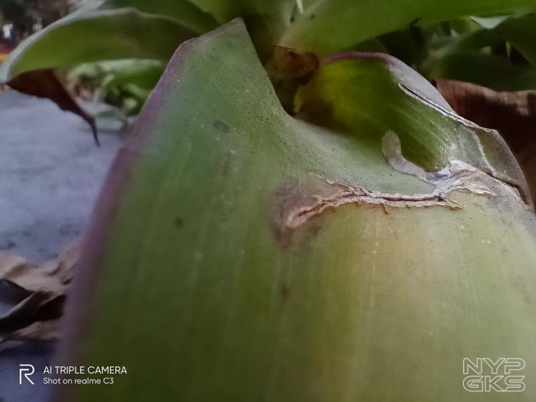 Realme-C3-Camera-Review-NoypiGeeks-5752