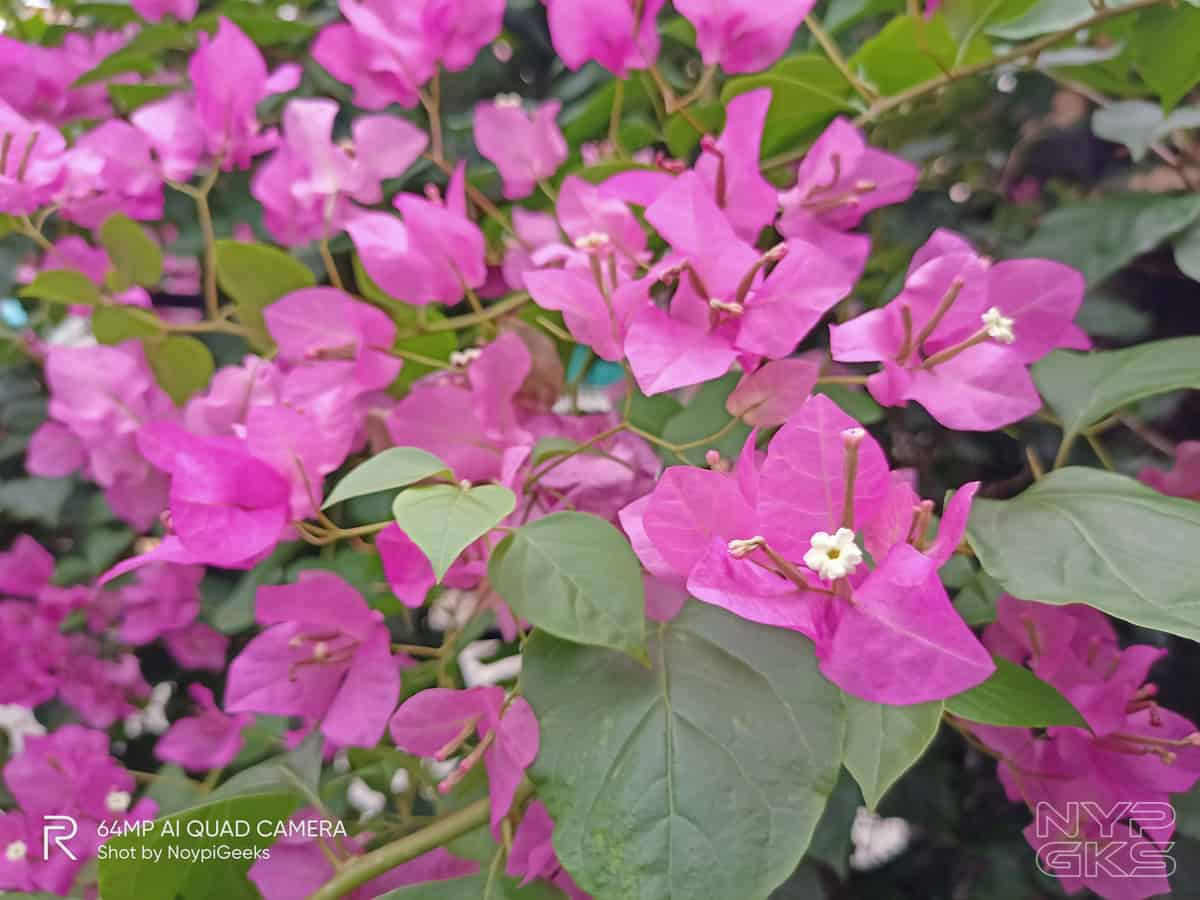 Realme-7-Camera-samples-NoypiGeeks-5613