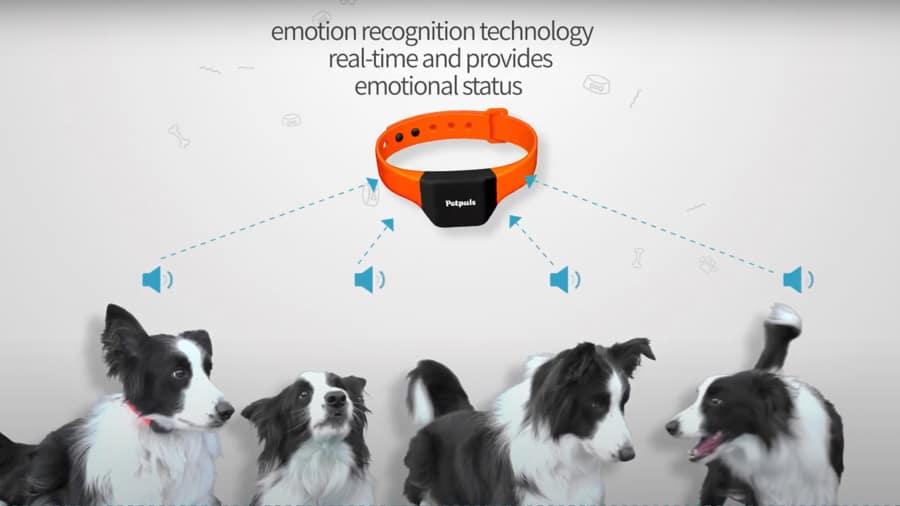 ai-smart-dog-collar-analyze-barks-pets-emotions-noypigeeks-5234